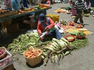 Circuit organisé en Equateur