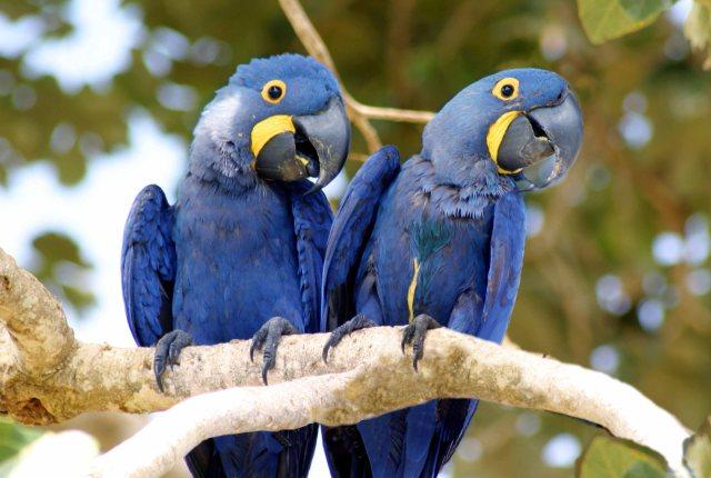 pantanal experience (4)