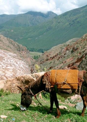 Pérou (24)