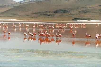 48 Laguna colorada Sud Lipez Bolivie
