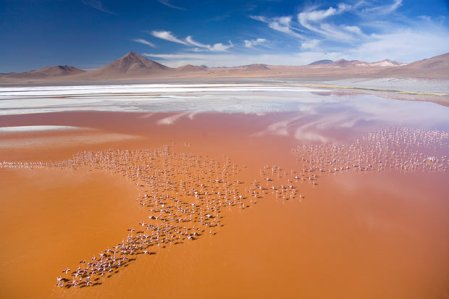 flamingoes_1678301i