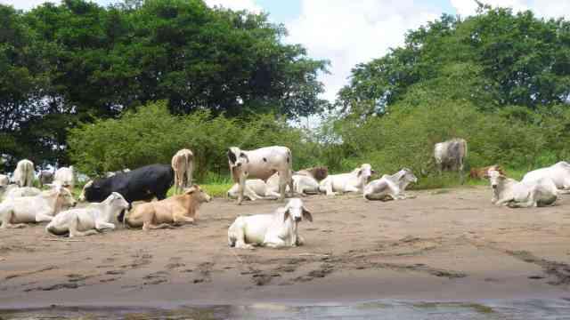 Voyage au costa Rica - album photos (10)