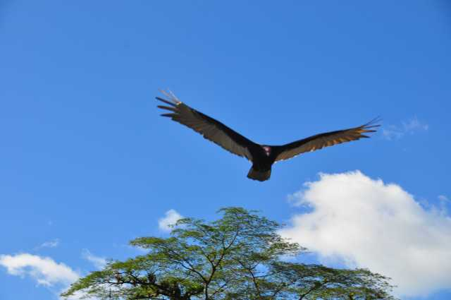 Voyage au costa Rica - album photos (4)
