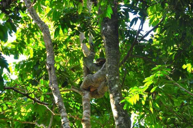 Voyage au costa Rica - album photos (7)